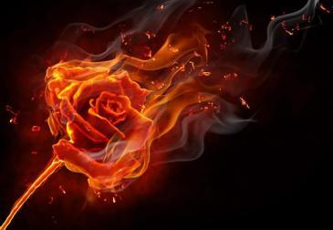 9952-burning-rose_zps2b9d32f6.jpg~original.jpeg