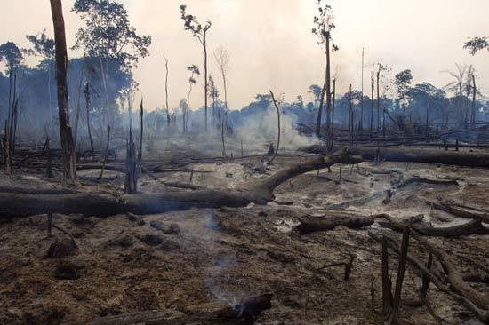 brazilian-rain-forest-destruction.jpg~original.jpeg